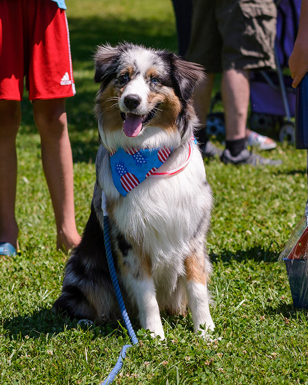 4th of July Puppy Parade